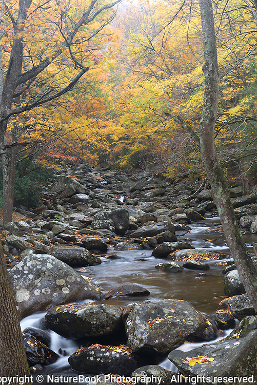 The golden leaves above the trees serve as a colorful canopy over this stream in Great Smoky Mountains National Park.