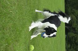 Eddie Sander with his Dogs Jackson and Inka<br /><br />18 June 2004<br /><br />Copyright Paul David Drabble<br /> [#Beginning of Shooting Data Section]<br />Nikon D1 <br /> Focal Length: 50mm<br /> Optimize Image: <br /> Color Mode: <br /> Noise Reduction: <br /> 2004/06/18 09:55:42.2<br /> Exposure Mode: Manual<br /> White Balance: Auto<br /> Tone Comp: Normal<br /> JPEG (8-bit) Fine<br /> Metering Mode: Center-Weighted<br /> AF Mode: AF-C<br /> Hue Adjustment: <br /> Image Size:  2000 x 1312<br /> 1/400 sec - F/4<br /> Flash Sync Mode: Not Attached<br /> Saturation: <br /> Color<br /> Exposure Comp.: 0 EV<br /> Sharpening: Normal<br /> Lens: 50mm F/1.8<br /> Sensitivity: ISO 200<br /> Image Comment: <br /> [#End of Shooting Data Section]
