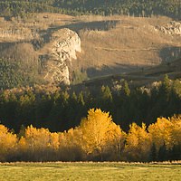 Fall-colored cottonwoods highlight northern  slopes of Gallatin Range, near Bozeman Montana.