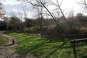 Bos bij de Kop van Schouwen bij Westenschouwen, Zeeland.Forest near the Kop van Schouwen, Westenschouwen, Zeeland, Netherlands