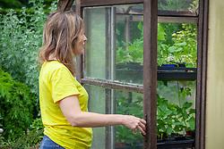 Opening a greenhouse door for ventilation in summer