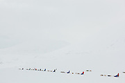 Commercial sled dog teams and their human clients take off down Bolterdalen, Svalbard.