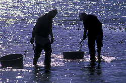 Stock photo of a pair of men wading to collect oysters