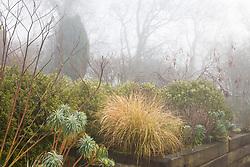 Foggy morning at Glebe Cottage. Stipa arundinacea