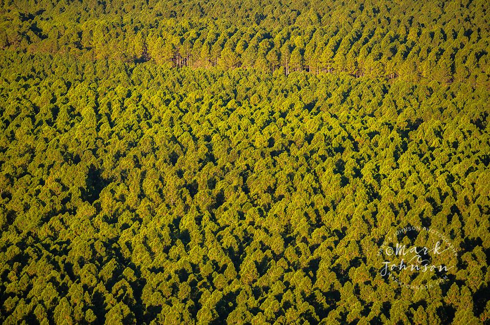Beerburrum East State Forest, managed forest, Sunshine Coast, Queensland, Australia