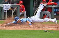 Kansas City Royals left fielder Alex Gordon (4) dives home for a run against the Los Angeles Angels during the fourth inning at Kauffman Stadium.