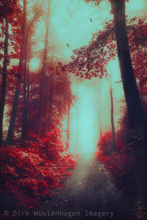 Surreal red tinted and coloured deciduous forest<br /> Redbubble Prints: http://rdbl.co/2zbEEcc<br /> Society6: http://bit.ly/2z70zPX