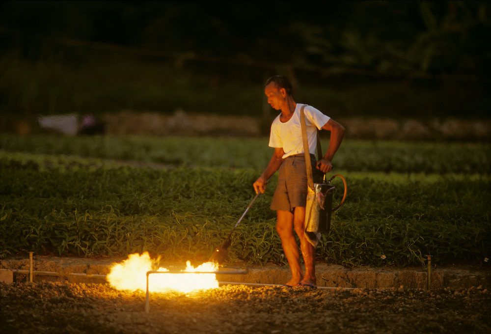 China, Hong Kong, Farmer scorches farm fields using crude torch in rural village in New Territories