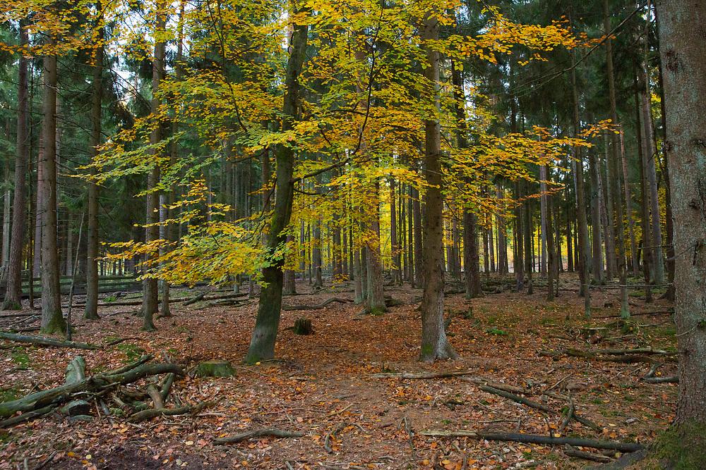 Schwarzwildgatter in der Segeberger Heide