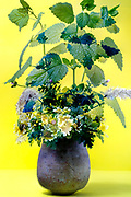 flowers and green leaf still life against a yellow background