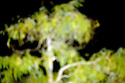 out of focus treetop at night