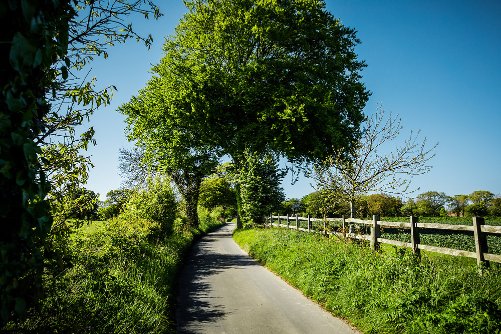 Green trees and fields surrounding a green lane in the countryside of Jersey, Channel Islands