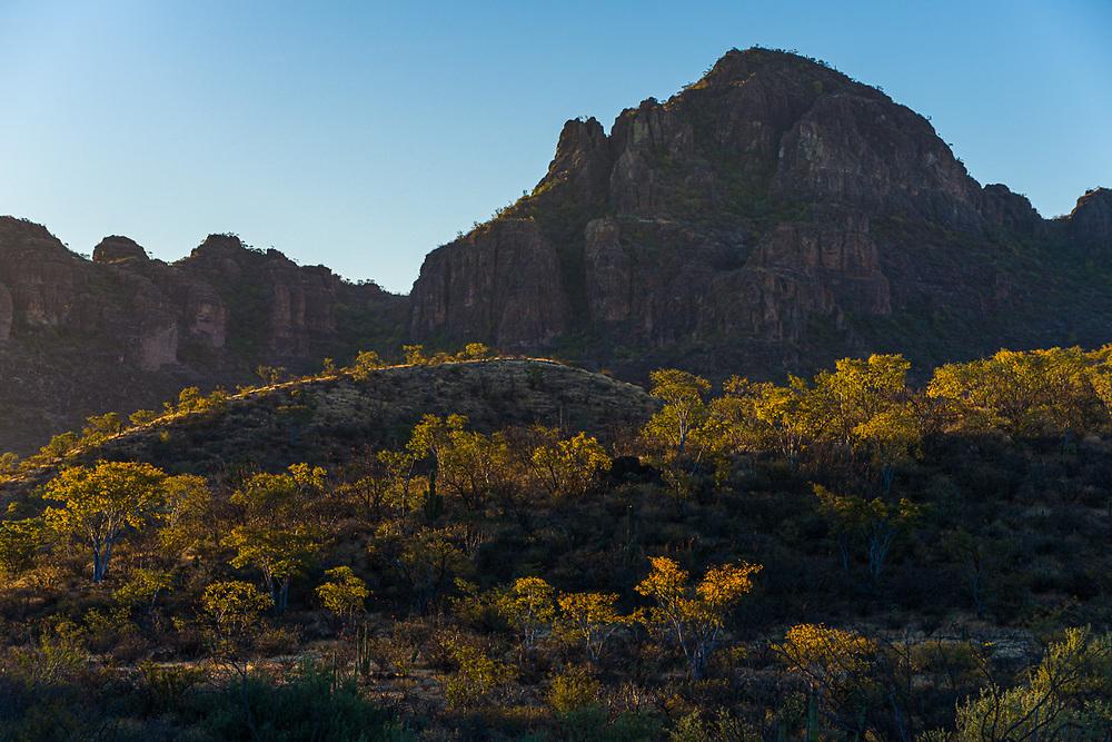 Sierra de La Giganta, morning light, February, near San Javier, Baja, Mexico