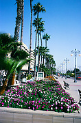 Flower beds along the sea front at Larnaca, Cyprus in 1998
