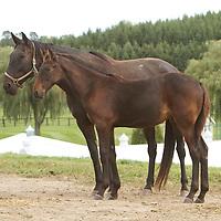 Tara Hills Stud 2011 - Farm images