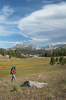 Adult male backpacker with blue backpack and red shirt on the Fremont Trail near Dads Lake. Bridger Wilderness, Wind River Range  Wyoming