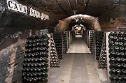 Bottles aging in the cellar. Codorniu, Sant Sadurni d'Anoia, Penedes, Catalonia, Spain