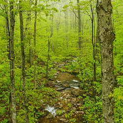 A stream in spring in a hardwood forest. Vermont's Green Mountains. Mount Tabor Road.