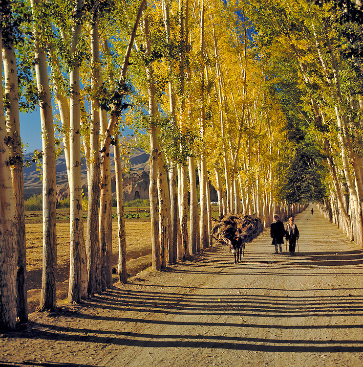 Farmers with a heavily laden donkey walk along a poplar lined road in the Bamian Valley of Afghanistan.