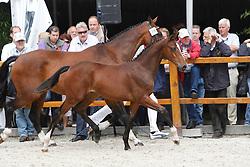 021 - Fanatiki<br /> KWPN Paardendagen Ermelo 2010<br /> © Dirk Caremans