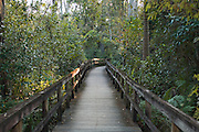Boardwalk in the Fakahatchee Strand State Park in the Everglades, FL.