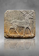 Hittite monumental relief sculpted orthostat stone panel from Water Gate Basalt, Karkamıs, (Kargamıs), Carchemish (Karkemish). 900-700 BC . Stag. Anatolian Civilisations Museum, Ankara, Turkey. With his large and many branched antler, he walks towards the right. <br /> <br /> On a grey art background. .<br />  <br /> If you prefer to buy from our ALAMY STOCK LIBRARY page at https://www.alamy.com/portfolio/paul-williams-funkystock/hittite-art-antiquities.html  - Type  Karkamıs in LOWER SEARCH WITHIN GALLERY box. Refine search by adding background colour, place, museum etc.<br /> <br /> Visit our HITTITE PHOTO COLLECTIONS for more photos to download or buy as wall art prints https://funkystock.photoshelter.com/gallery-collection/The-Hittites-Art-Artefacts-Antiquities-Historic-Sites-Pictures-Images-of/C0000NUBSMhSc3Oo