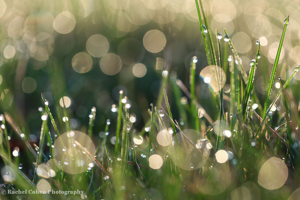 """""""Morning Magic"""" 2<br /> <br /> Sunlight dances in the grass in this beautiful nature abstract!"""