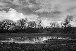 Flooded field, Rothley, Leicestershire, England.<br /> Photo: Ed Maynard<br /> 07976 239803<br /> www.edmaynard.com