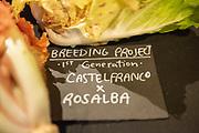 Chicory Breeding Project by Eric Budzinski of Uprising Seeds