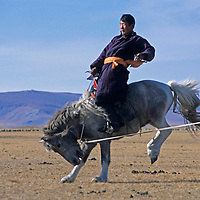 MONGOLIA, Darhad Valley herder, Batsuren, breaks a horse for riding so that it can be used during migration.