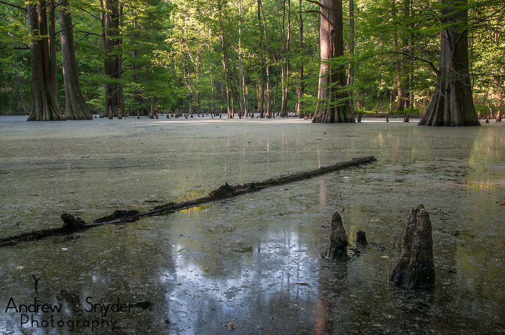 A backwater swamp in Water Valley, Mississippi