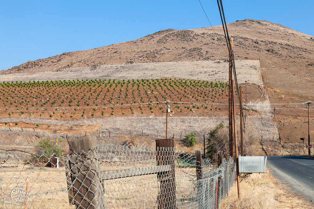 Vertical farming on hillside near Porterville, Tulare County, San Joaquin Valley, California, USA