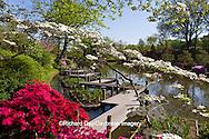65021-03519 Walkway in Japanese Gardens in spring, Missouri Botanical Gardens  St Louis, MO