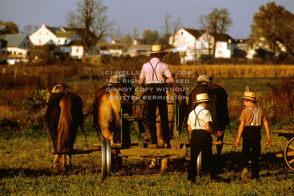 Americana-photo-decor-online-by-Randy-Wells-travel-photographer-videographer, Image of Amish children working on a farm with horses pulling hay, Lancaster County, Pennsylvania, American Northeast