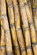 Bamboo canes, Guilin, China