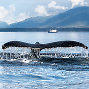 Water streaming off of a diving humpback whale's fluke, with 42ft Nordic Tug Legend visible in the background