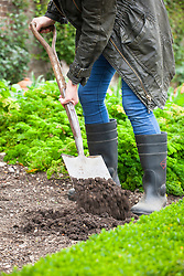 Digging over ground in a vegetable garden with a spade