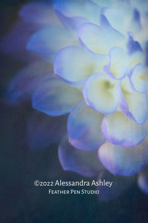 Blue and white cupped-petal dahlia with painted brush strokes and paper texture.
