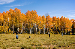 Photographers making pictures of Golden Aspen leaves, aspen trees in fall, white bark, autumn, fall leaves, fall color, Markagunt Plateau, Cedar Mountain, Hwy 132, Mile Marker 24, Dixie National Forest, Utah, UT, photographers, no model release, sightseeing, Image ut328-18916, Photo copyright: Lee Foster, www.fostertravel.com, lee@fostertravel.com, 510-549-2202