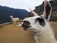 dav Machu Picchu, Peru, South America