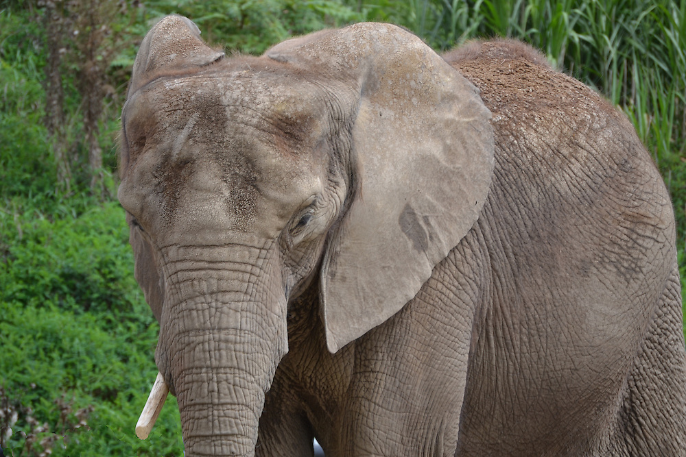 Elephant at the Pittsburgh Zoo