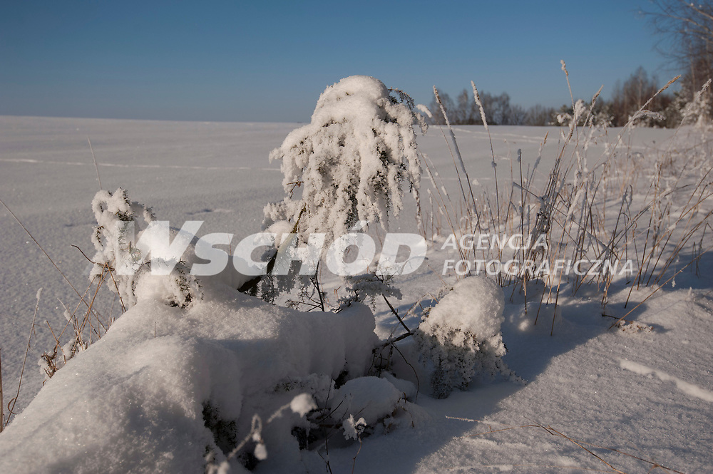 27.01.2013 Zima w Puszczy Knyszynskiej fot Michal Kosc / AGENCJA WSCHOD