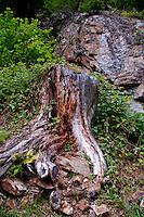 Golzern, Switzerland - close-up of a stump and stone.