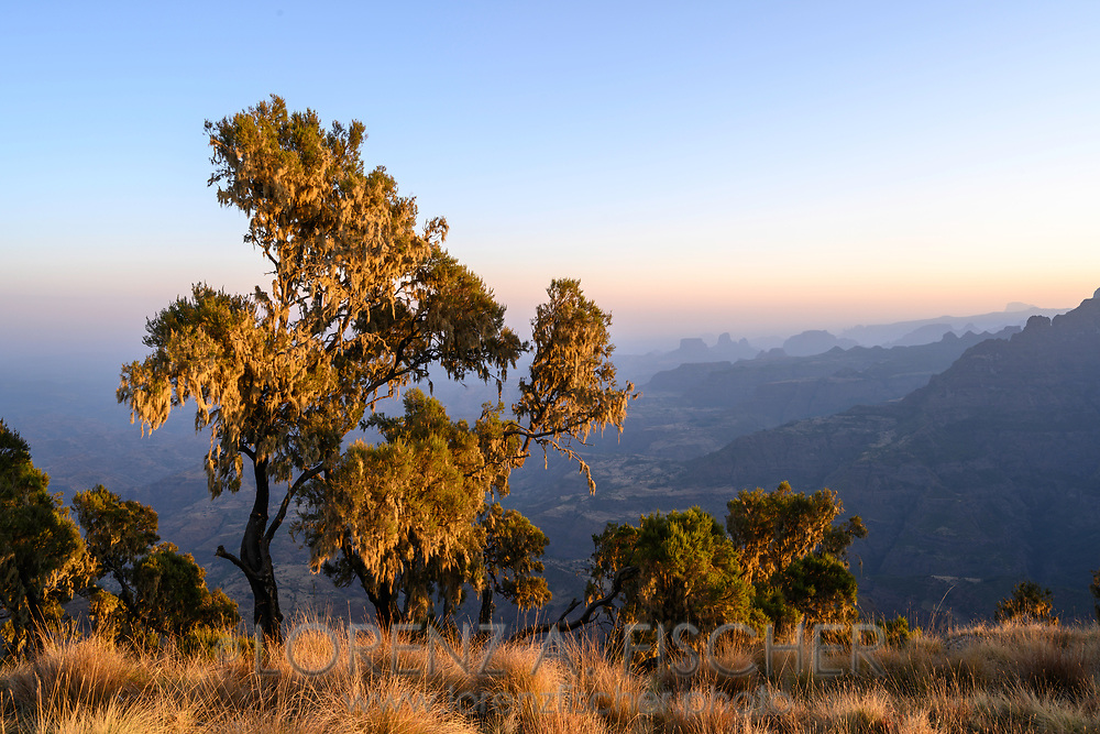 Landschaft mit Baumheide (Erica arborea) im Simien Nationalpark bei Sonnenaufgang, Debark, Region Amhara, Äthiopien<br /> <br /> Landscape with heather (Erica arborea) in Simien National Park at sunrise, Debark, Amhara Region, Ethiopia