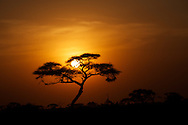 First evening game drive in Amboseli
