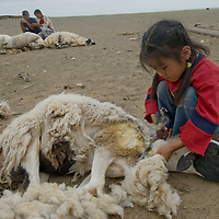 A young nomad helps to shear the family's sheep near Dalanzadgad in the Gobi Desert, Mongolia.