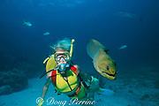 green moray eel, Gymnothorax funebris, startles woman diver, Belize (Caribbean)