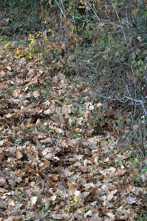 autumn leaves and twigs