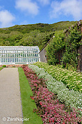 One of the restored glass houses, there were originally 21 glasshouses and a border with Fuchsias and Sedums along the east wall (5 on the map) in the Flower Garden area of The Victorian Walled Garden at Kylemore Abbey. Only plants and flowers that were introduced to Ireland before 1901 are used in the gardens. The 6 acre garden is to the west of the Abbey originally known as a castle when it was built by Mitchell and Margaret Henry in the 1850's. The garden is on a south slope at the foot of Duchruach Mountain and facing Diamond Hill. It was chosen as the warmest and brightest spot on the estate with a mountain stream providing water. It is now a Benedictine community; open seven days a week all year round. The Abbey is located in Connemara in the west of Ireland. August