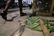 Green iguanas sold live for curry, Starbroek market, Guyana
